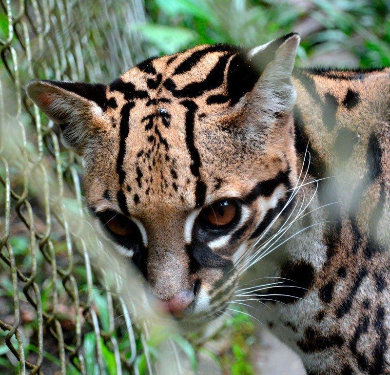 animales rescatados AmaZOOnico
