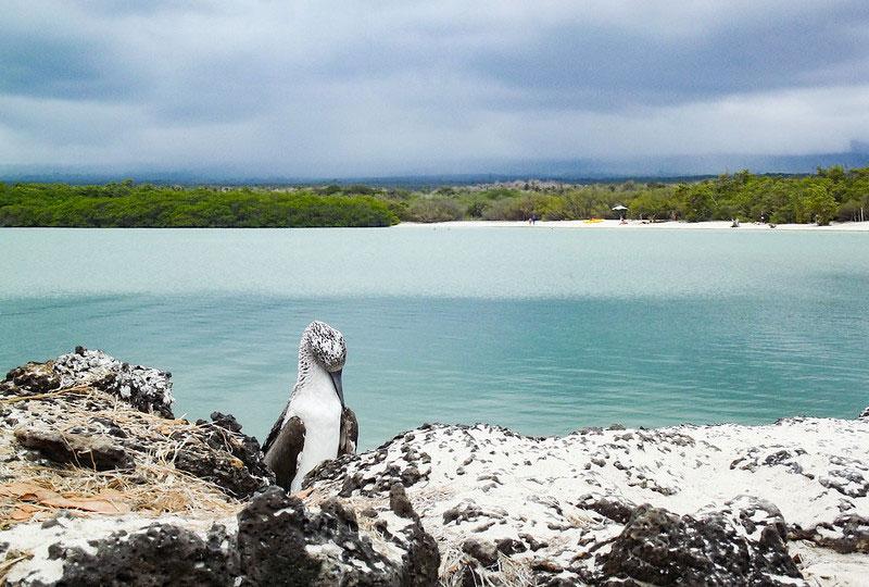 Playa de Tortuga Bay Galápagos