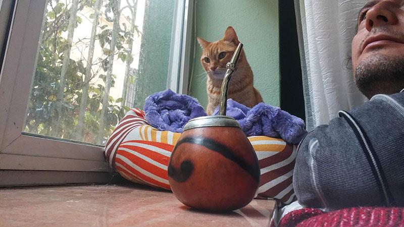 Viajar con gatos en cabina
